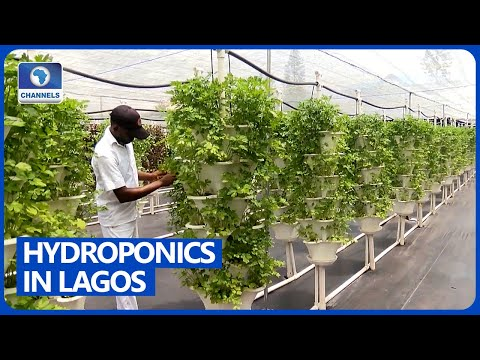 Growing Food With Hydroponics In Nigeria