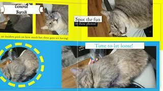Такого вы ещё не виделиПриколы с котамиСамые смешные котыvideo From The Life Of A Cat