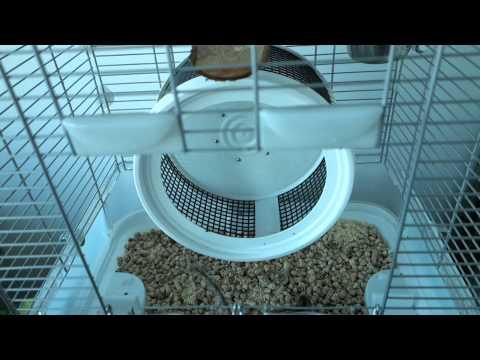 My Chipmunk Enclosure