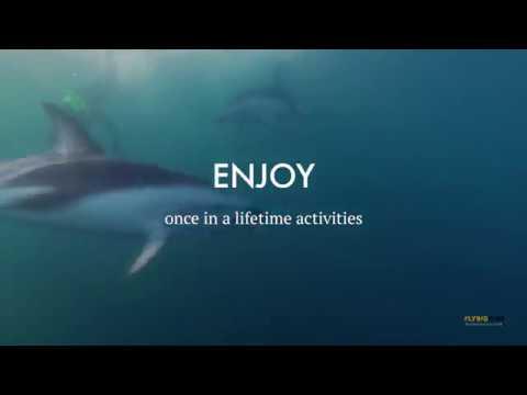 Flying Kiwi Adventure Tours | New Zealand Tour