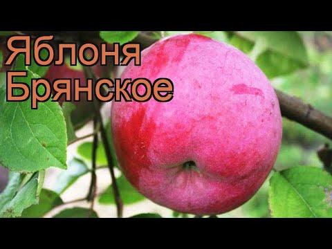 Яблоня обыкновенная Брянское (malus) 🌿 яблоня Брянское обзор: как сажать саженцы яблони Брянское