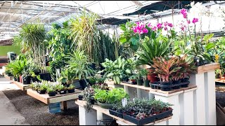 Uncommon House Plant Tour of My Favorite Nursery! Go Plant Shopping With Me At Edwards Greenhouse!