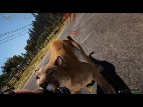 Cougar Attack in the Streets