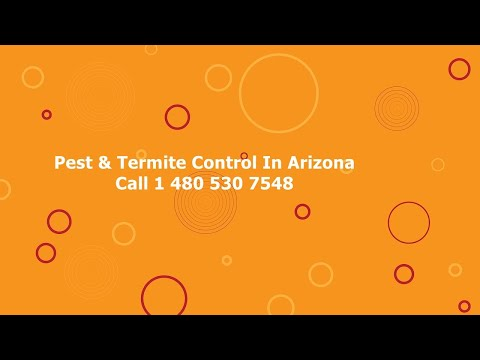 Pest Control Tempe Cheap Termite Removal In Arizona