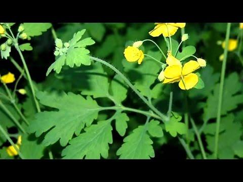 Энциклопедия лекарственных растений и целебных трав
