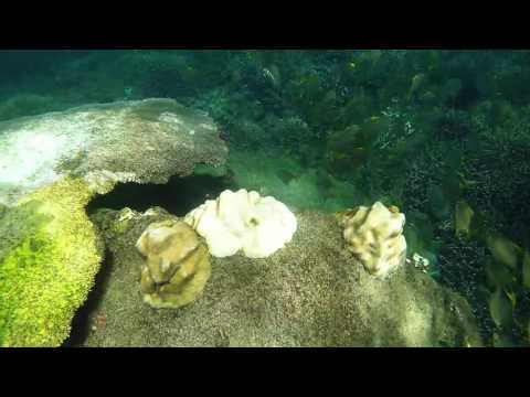Go Pro Sri lanka - Pigeon Island