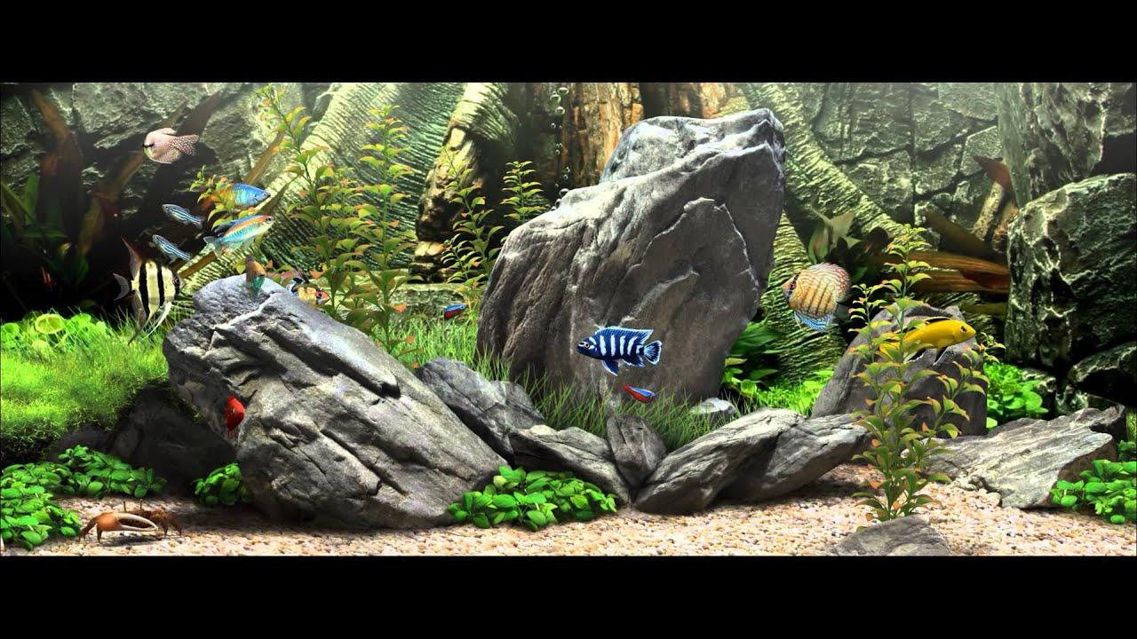 Dream aquarium 60fps youtube for Dream of fish tank