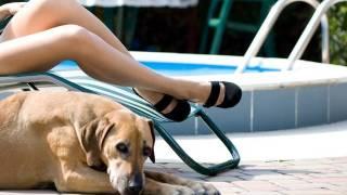 Психолгия. Как на нас влияют домашние животные