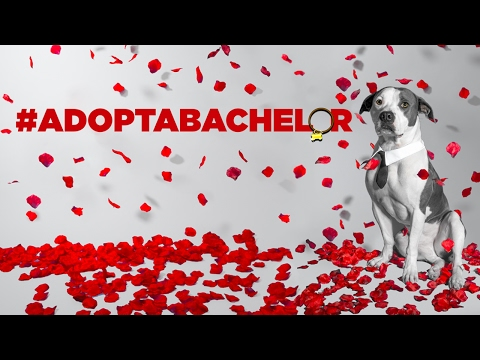 #ADOPTABACHELOR: If only every adoption was this dramatic...