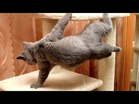 Most hilarious animal & pet moments that will make you laugh - Funny animal compilation