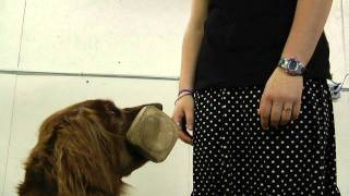 2h. Dumbbell Recall: Oregon 4-h Dog Obedience Project
