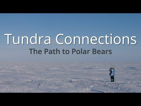 The Path to Polar Bears, 2017