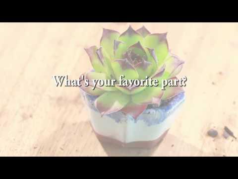 Secret Seattle | Urban Sprouts | House Plant