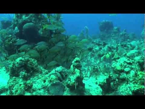 Brian Walker Compilation, January 2009 - Seasports Diving, Grand Cayman