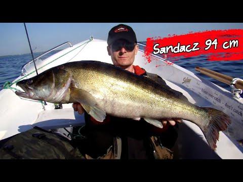 Sandacz 94 cm / Spinning / Catch & Release - Turawa 03.06.2017