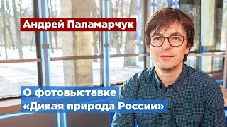 Петербуржцев приглашают на фотовыставку «Дикая природа России»