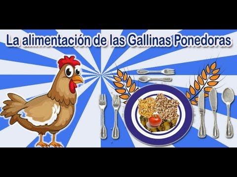 La alimentación de las gallinas ponedoras caseras | TuGranjaenCasa.Com