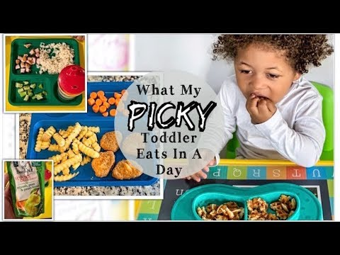 What My PICKY Toddler Eats In A Day   Easy Meal Ideas   Miss Morgan JJ