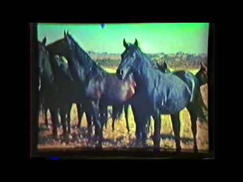 1941 Quarter Horse Film narrated by BF Yeates