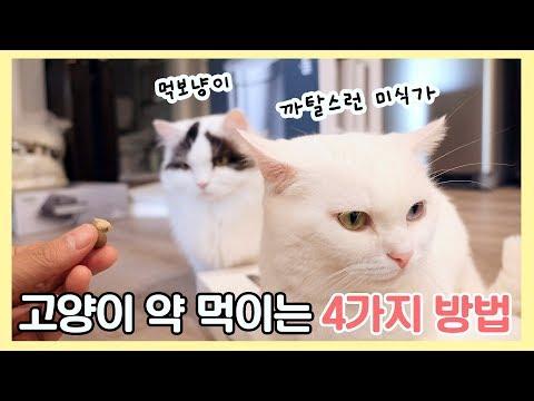 고양이 약 먹이는 4가지 방법: 먹보 vs 까탈스런 미식가