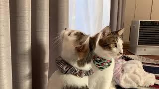 いちくん、なぎちゃんのきょうだい猫ちゃん、鏡の光をロックオン!