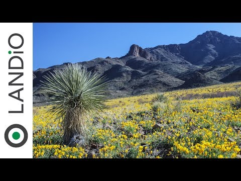 Land for Sale in New Mexico : 14.8 Acre Ranch with Mountain Views & Road Frontage (Available)