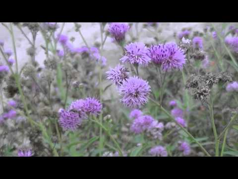 PLANTS ANIMALS AND INSECTS gulf coast TRAILER