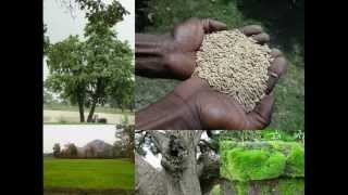 Medicinal Rice B4 Formulations for Influenza: Pankaj Oudhia