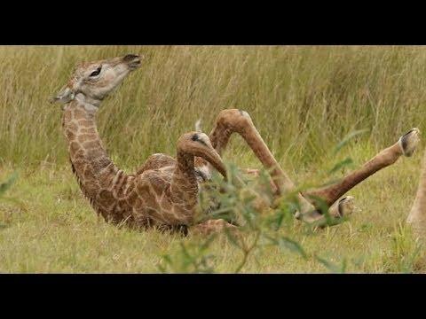 Baby giraffe born in Port Elizabeth