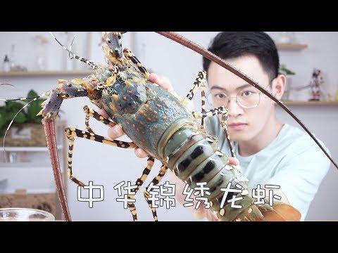 """極為稀有的中華錦繡龍蝦,古人奉為""""神蝦"""",曾賣出60萬天價! 【奇異小北】"""