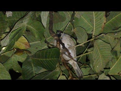 Bird Sleep At Night - Natural Life