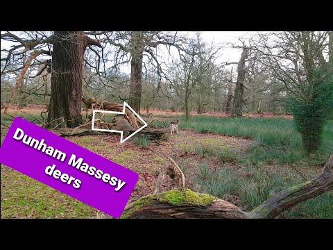 Dunham Massey Deer Walk Lymm