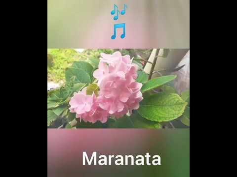 Maranata - Jesus Breve Virá