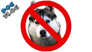 DOGVLOG: 20 ПРИЧИН ПРОТИВ ХАСКИ. Говорящая собака. Хаски Бандит