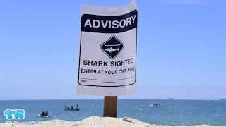 Crystal Beach Shark Attack: Man Bitten at Galveston, Texas, Beach | Gift Of Life