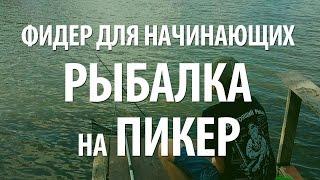 ФИДЕР ДЛЯ НАЧИНАЮЩИХ - ЛОВЛЯ НА ПИКЕР РЫБЫ