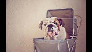 24-Hour Emergency Veterinary and Pet Clinic Cedar Hill MO | Animal Hospital