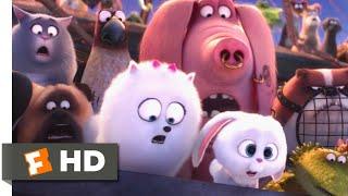 The Secret Life of Pets - Saving Duke Scene | Fandango Family