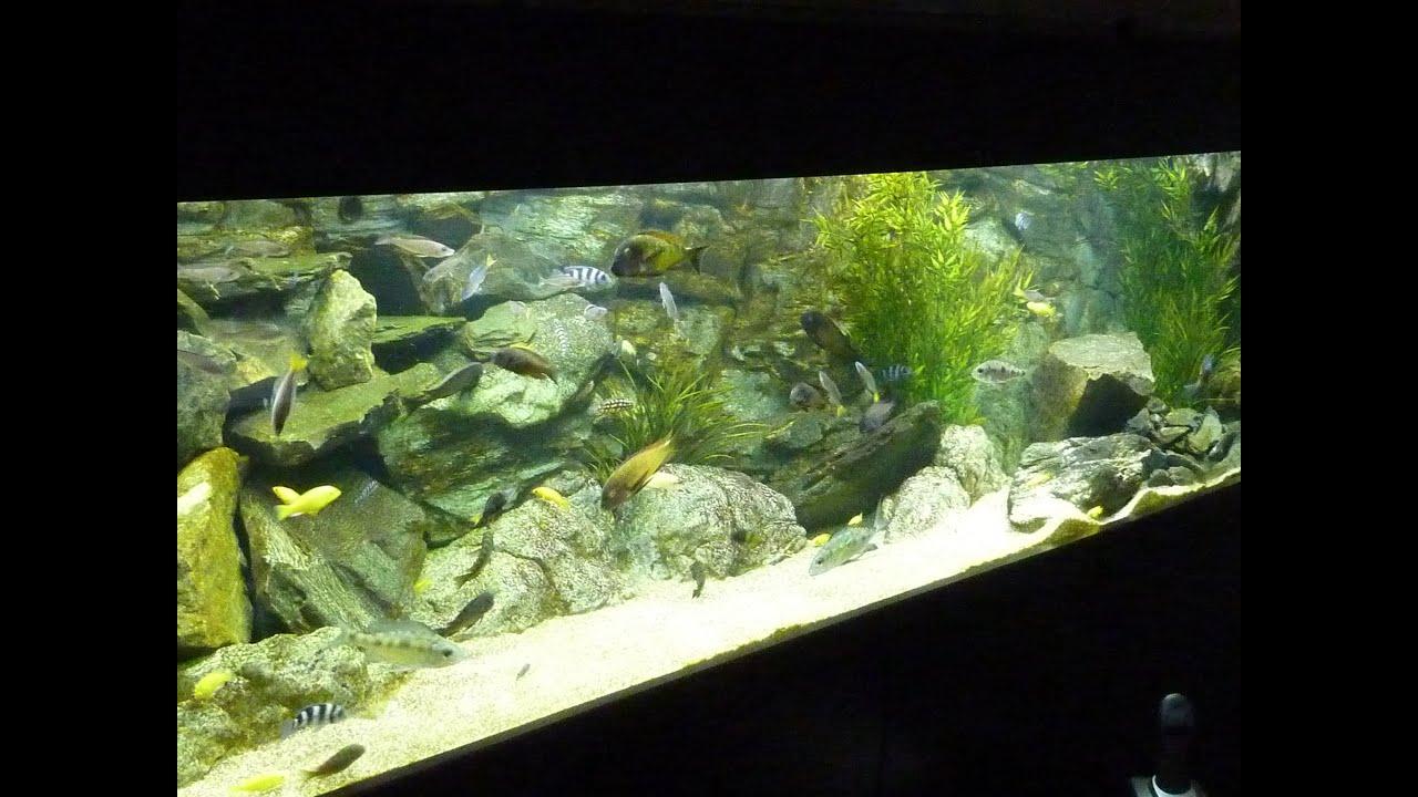 Fish in aquarium youtube - Fish In Aquarium Youtube