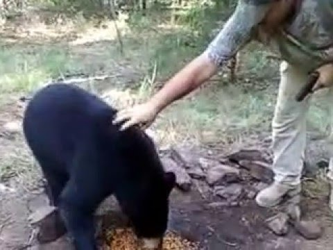 Man petting a Wild Yell County Arkansas Black Bear
