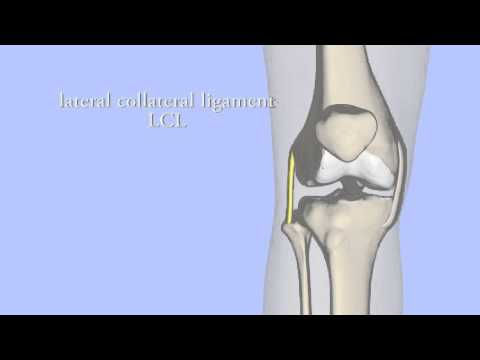 Collateral and Cruciate Ligaments of the Knee