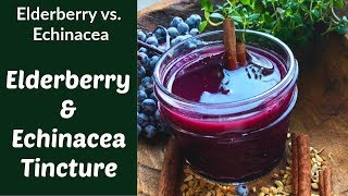 Elderberry & Echinacea Tincture (When to Take Them and Why They are So Great for You)