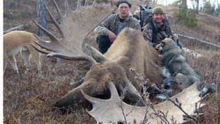 G ANT MOOSE élan Géant And SNOW SHEEP Hunting Chasse In Far East Russia KAMCHATKA   TCHUKOTKA.
