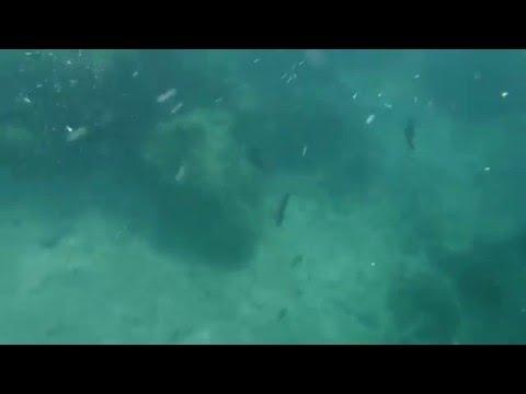 san agustin fish sanctuary romblon