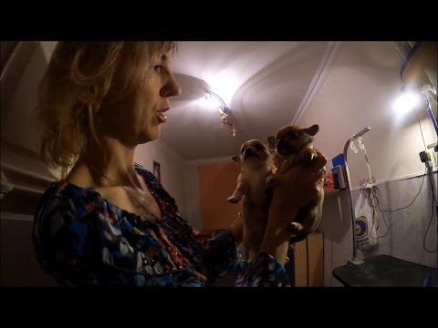 Ёлки новые / Ёлки 6 (2017) - Художественный фильмиз YouTube · Длительность: 1 мин37 с  · Просмотры: более 1.000 · отправлено: 28-6-2017 · кем отправлено: Ёлки новые 2017 Смотреть фильм онлайн