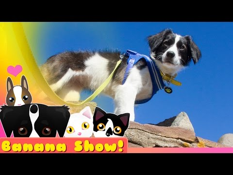 SUPER ADVENTURE DOG | The Banana Talking Dog Show Ep: 13