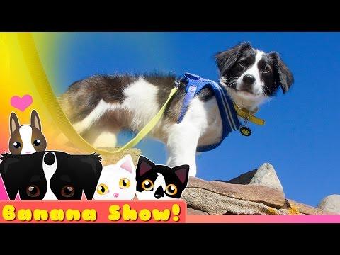 SUPER ADVENTURE DOG | The Banana Talking Dog Show Ep: 13