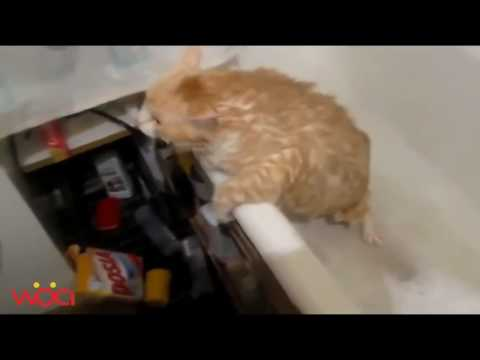 Cats Scared of Water Funny Cat Bathing Time