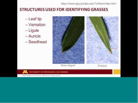 Diagnosing Lawn Problems   Sam Bauer 20150701 1700 1 2