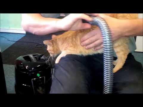 Kočky milují, když je vysáváte Hylou